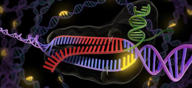 CRISPR - revolutionary new tool to cut and splice DNA.