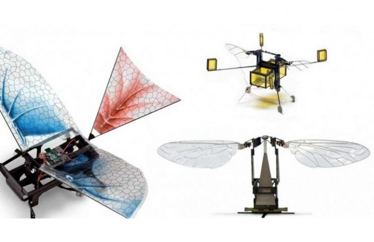 Robots Were Inspired by Insects