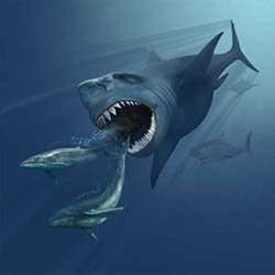 The Megalodon, a bus-sized shark and one of the largest predators to have ever lived. A shower of muons may have caused its extinction, along with other megafauna.